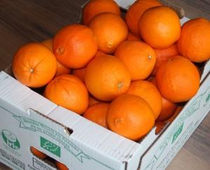 Orangen BioNetworkWestHellas 2016-03