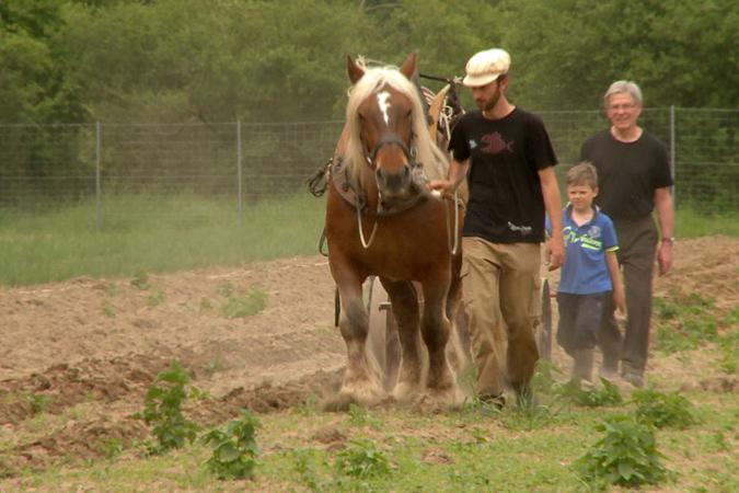 Foto: Mann führt ein braunes Pferd mit Pflug über einen Acker, wird von Kind und weiterem Mann begleitet